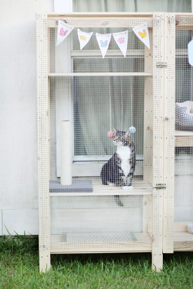 a lovely catio built of two IKEA Henjne shelves and some chicken wire is an amazing idea for your furry friend
