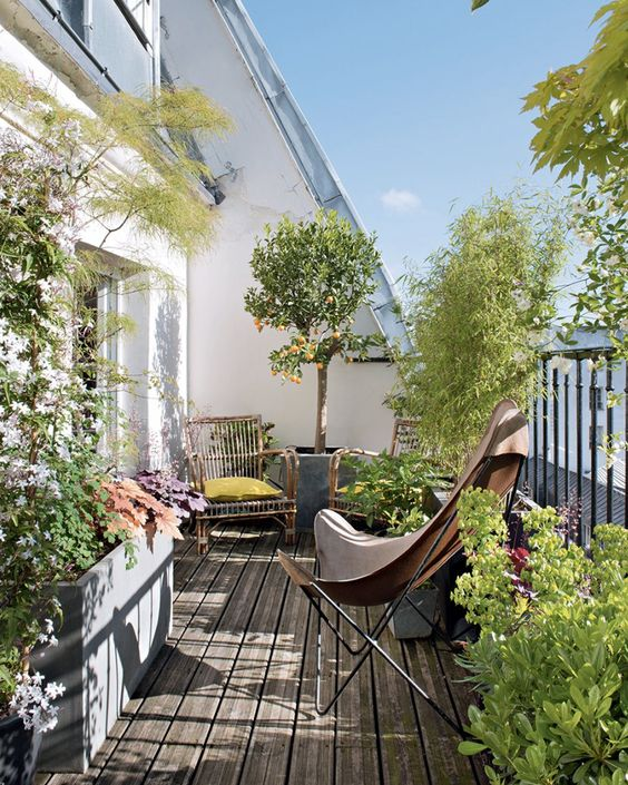a large summer balcony styled as a garden, with lots of potted plants and trees, rattan and leather chairs