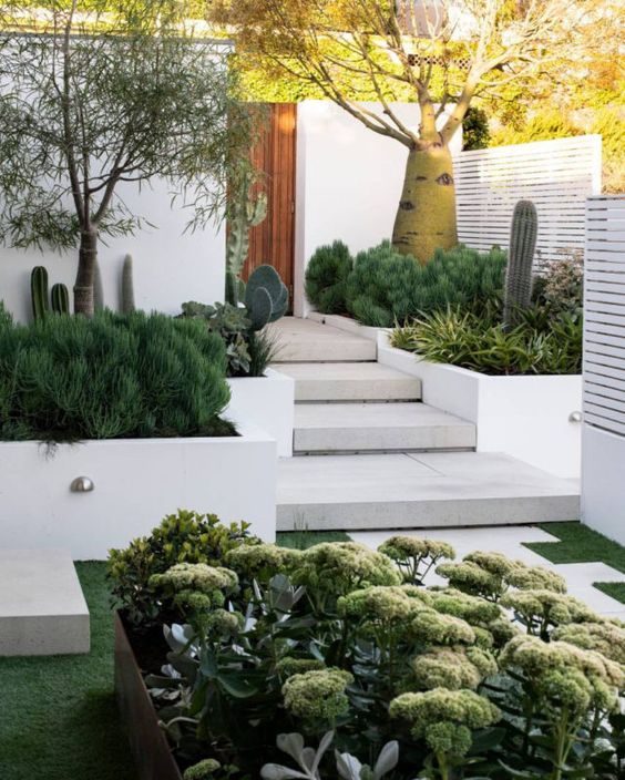 a bold modern front yard with stone steps and tall flower beds with succulents, cacti, trees and greenery has a wow effect
