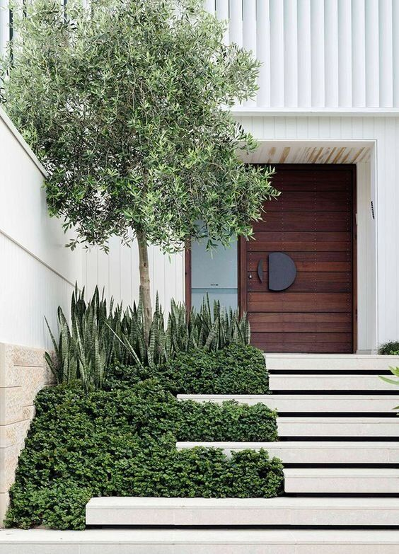 a bold modern front yard with white steps, greenery, succulents and a tree looks stylish, bold and chic