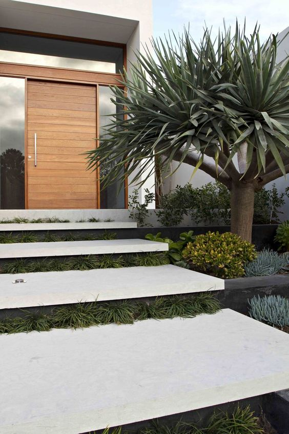 a desert-style modern front yard with greenery between the steps, greenery lining up the stairs and a large tree has a wow factor