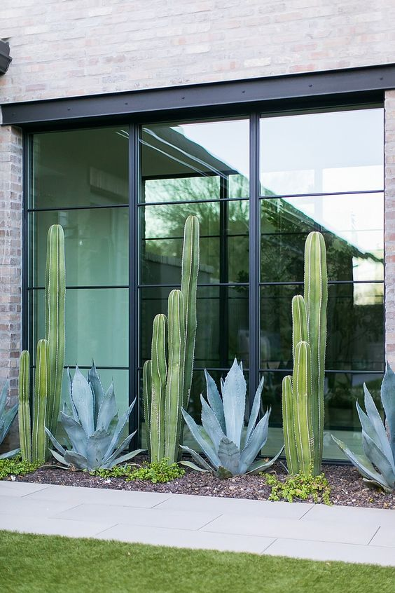 a modern front yard clad with stone tiles, with grass and cacti and succulents that line up the windows