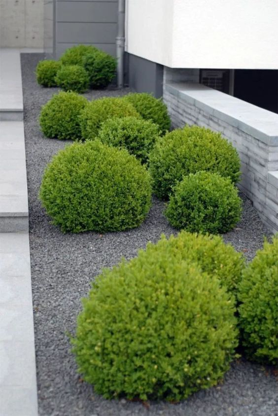 a modern to minimalist front yard with gravel and green balls plus stone tiles is a very laconic and elegant space
