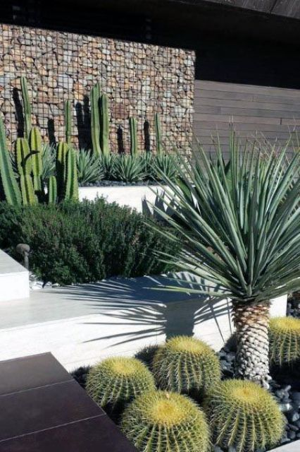 a stylish and catchy modern front yard with cacti, succulents and a agava is a bold and cool idea that will wow everyone