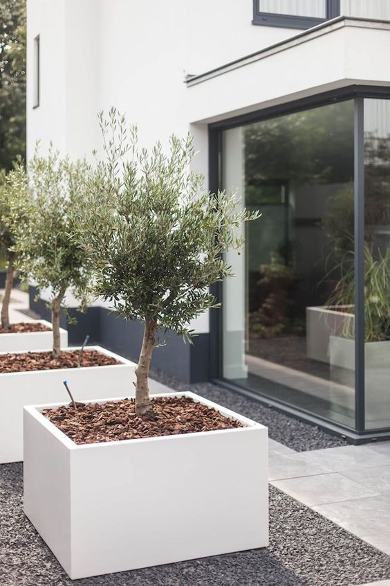 an elegant front yard with minimalist white planters with trees is a stylish idea and tiles covering it for a modern feel