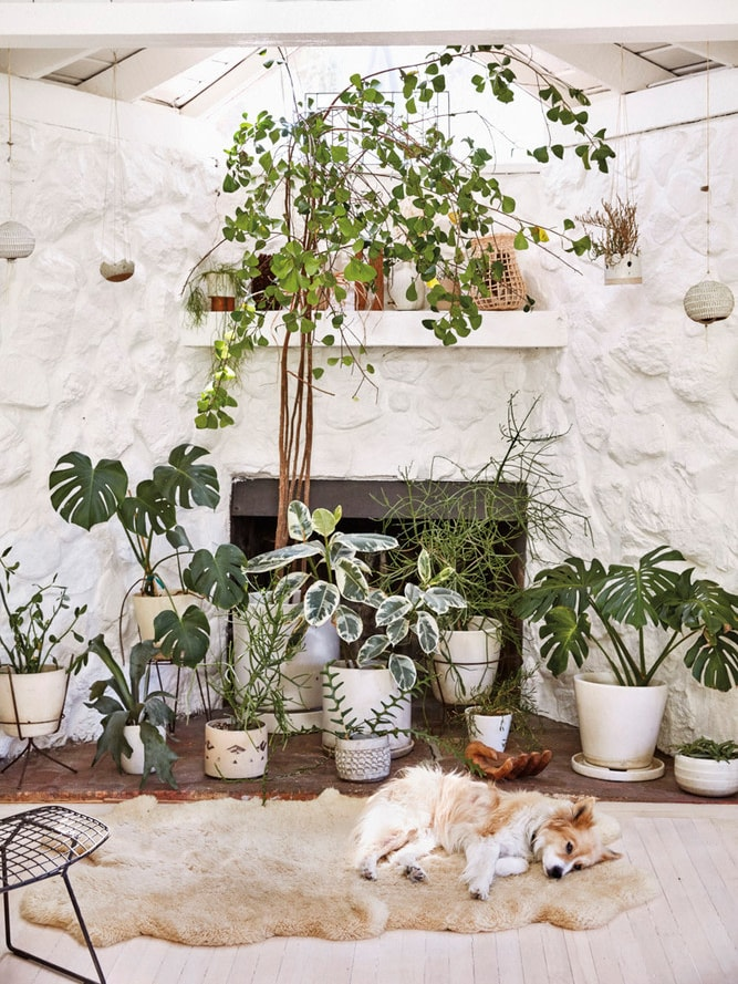 a lovely space with a white stone accent wall and a built-in fireplace used as a potted plant display and all around it too