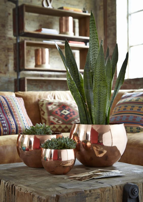 an arrangement of copper planters, with succulents is a very pretty and cool idea for any space in any style