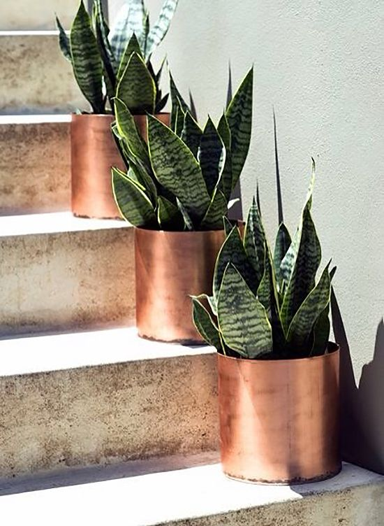 potted succulents in copper planters are lovely for accenting both an indoor and outdoor space
