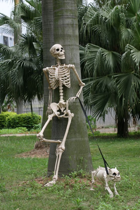 a cute and fun mini skeleton scene with a skeleton walking its skeleton dog is a fun and cool idea for Halloween