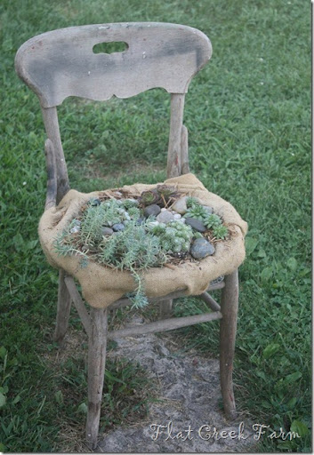 A Succulent Old Chair For A Garden