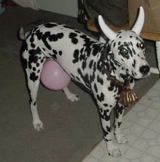A Cow & 15 Cool Dog Halloween Costume Ideas - Shelterness