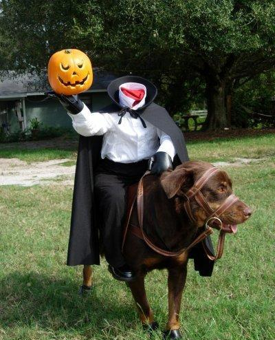 15 Cool Dog Halloween Costume Ideas