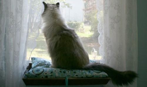 Amazing Diy Cat Window Perch