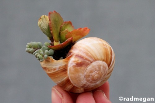 Amazing Diy Garden Of Snail Shells