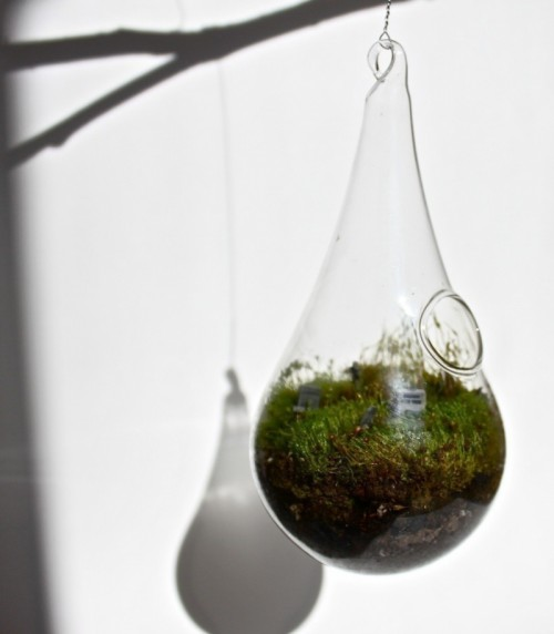 Halloween terrarium (via shelterness)