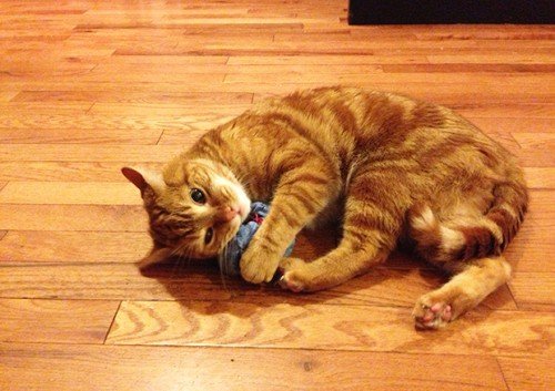 old shirt cat toy (via kittenhood)