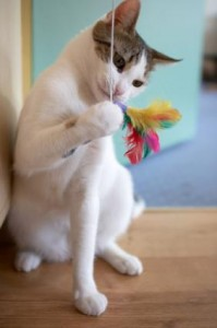 feather cat toy (via thethriftymama)