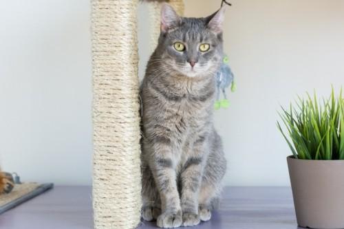 Condomínio impressionante do gato de DIY das tabelas de IKEA