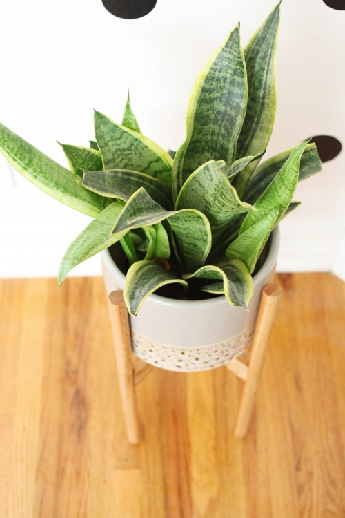 wood plant stand (via shelterness)