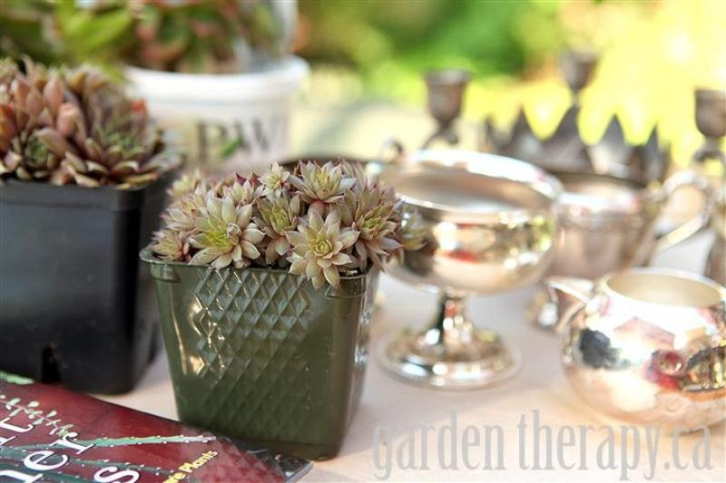 Charming Vintage Silver Garden Of Succulents