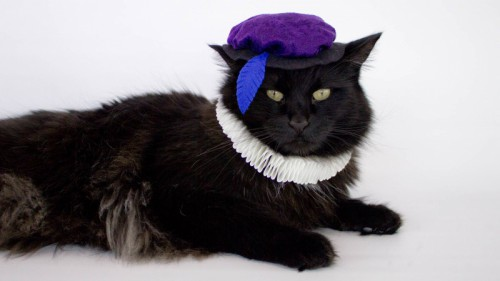 Renaissance cat costume