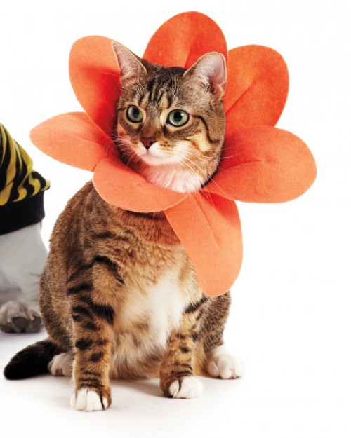 petaled cat collar (via marthastewart)
