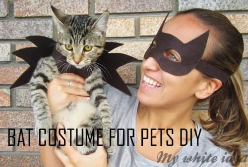 bat cat costume