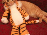 tiger kittie costume
