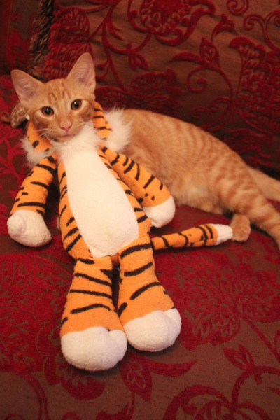 tiger kittie costume (via thebloggess)