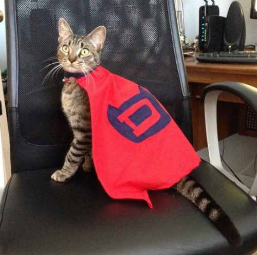 supercat costume (via kollabora)