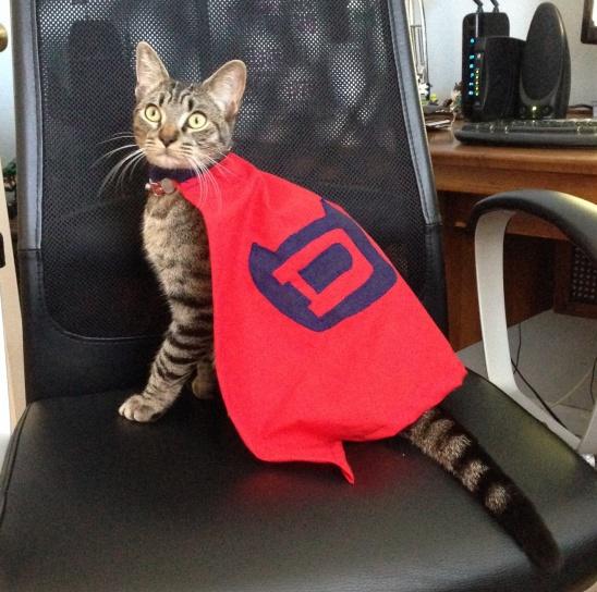 supercat costume