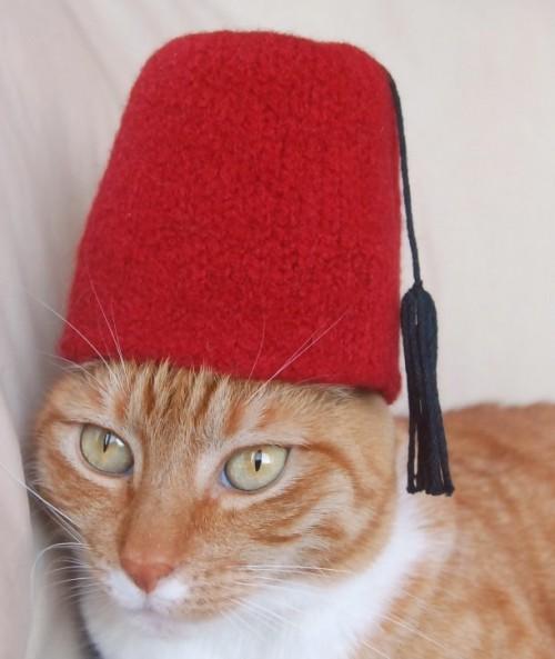 Turkey national hat for a cat (via spindlesandspices)