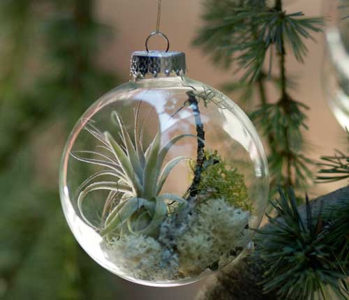 Christmas Tree Ornaments With Living Plants | Shelterness