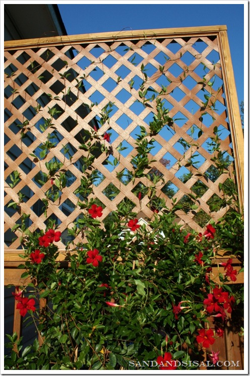 11 Cool And Easy Diy Deck And Patio Privacy Screens