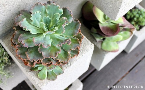 Cool Concrete Blocks For Planting Succulents