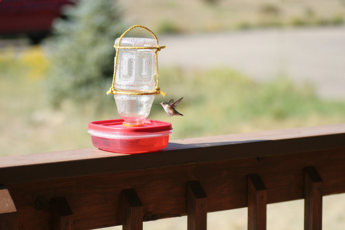 plastic hummingbird feeder (via shelterness)