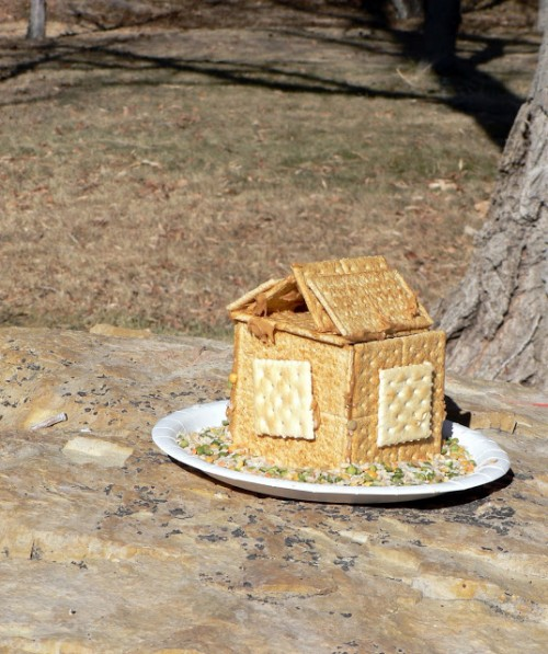 bird house bird feeder (via blessthismessplease)