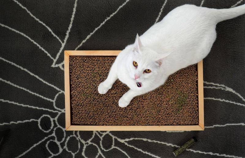comfy cardboard scratcher