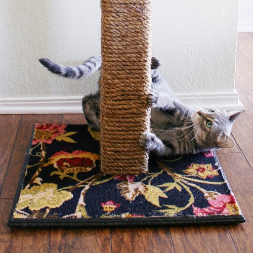 rope and carpet scratcher (via dreamalittlebigger)
