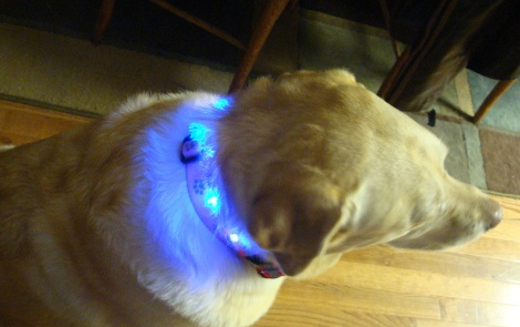 LED dog collar (via ubergizmo)