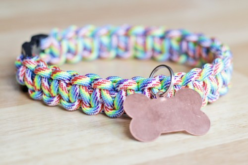 rainbow paracord dog collar