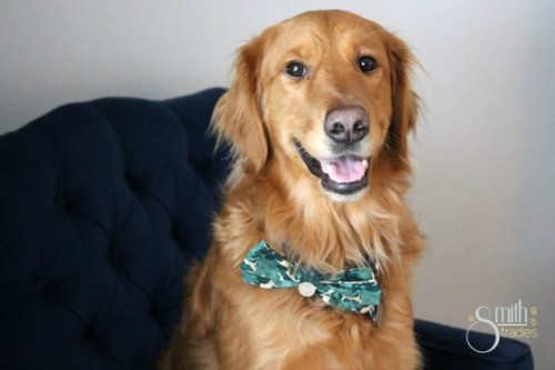 doggie bow tie (via asmithofalltrades)