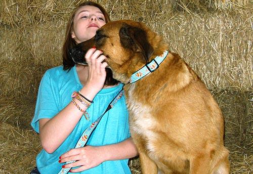 dog collar and leash (via sew4home)
