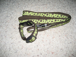 colorful dog collar and leash