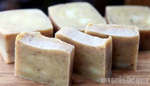 cold process ginger soap (via gardentherapy)