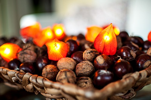 dry physalis lights (via delifromthevalley)