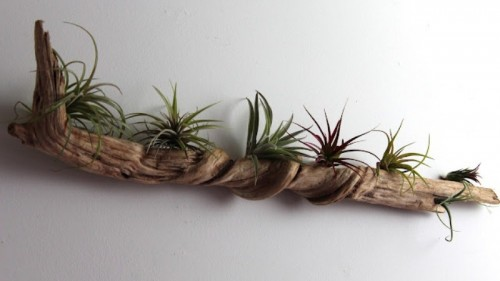 driftwood wall garden (via shelterness)