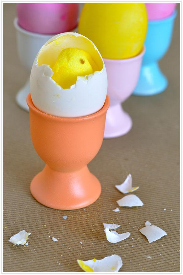 chicks in egg shells
