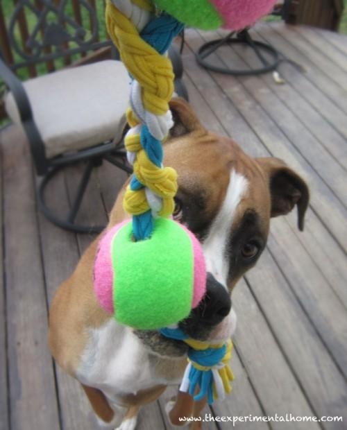 yarn scrap dog toy