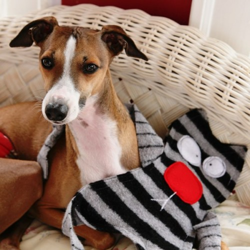 wool sweater dog toy (via mysocalledcraftylife)
